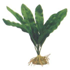 Listagem de produtos for Plantas decorativas amazon